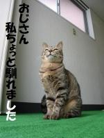 kiji6.jpg
