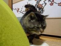 umekichi6.jpg