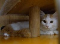 譲渡猫2.jpg
